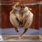 スミソニアン博物館で世界初の人工心臓が公開される!!!海外の反応「人類の医療の進歩の歴史を感じるね」