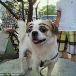 中国で眉毛風の入れ墨をされた犬が歩いているのを目撃される