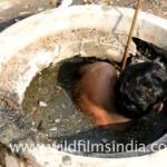 世界で最も汚い仕事? インドの下水作業員