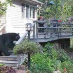 庭に大きなクマが! そのときとった家主の行動とは・・・