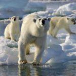 気候変動を止めないと2030年までに1億人が死亡する報告が出される