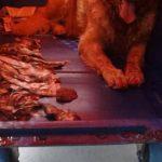 飛行機内での悲劇?ある犬の死が他の犬へも飛び火?