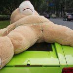 クマの彼女をランボルギーニの屋根に乗せて罰金