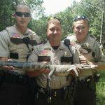 アリゲーターがミネソタ州の自転車用の道路上で捕獲されました。