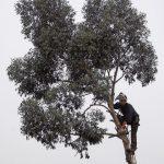 30m以上の高さの枝を切るイギリスの高枝剪定職人がものすごい