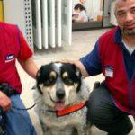 新規雇用は男性と彼の犬をペアとしました。