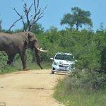 怒り狂う巨象がヒュンダイ車に襲い掛かる!!! 最後はたこ焼きみたいにひっくり返される・・・