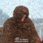 中国人が身体に蜜蜂をくっつける記録で世界記録を更新!今回の記録はなんと100万匹以上!!!重さにして109kgとのこと!海外「意味不明すぎる」