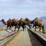道路を渡る動物たちの癒される画像