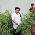 【朗報】北朝鮮がエイズ特効薬を開発!!!海外の反応「デブの頭を治す方が先だろ」