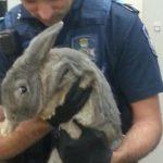 《世界の珍事件》ウサギを飼ってはいけません。逮捕されます。