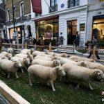 ロンドンをの通りを羊が埋め尽くした