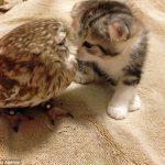 日本のカフェでフクロウと子猫が大人気!海外の反応「かわいそうなフクロウ、森に帰りたいだろうに」