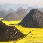 中国のもうひとつの黄河!? 黄金の菜種畑が一面に広がる雲南省羅平県の景色