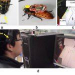 中国がゴキブリを自在に操れるとんでもない技術を開発!!!海外の反応「新しい時代の幕開けかもしれない」