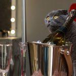 とうとう猫と一緒にワインを飲めるようになりました。