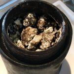 いい感じの熟成?ダイバーがバルト海の難破船から17世紀のチーズを発見しました。